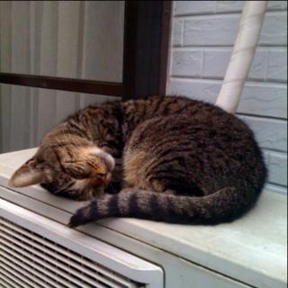 ルミコの寝顔