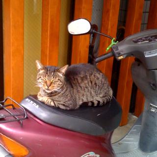 今日も今日とて猫がバイクで