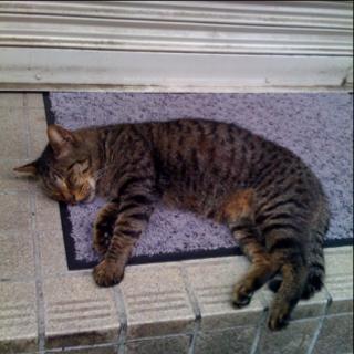 ルミコのだらりとした寝姿