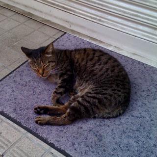 猫が軒先で丸くなる