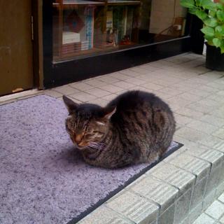 今日も今日とて軒先で猫
