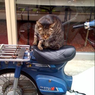 今日も今日とてバイク猫
