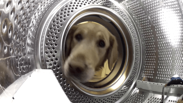 【動画】洗濯機からお気に入りのテディベアのぬいぐるみを救出するゴールデンレトリバー