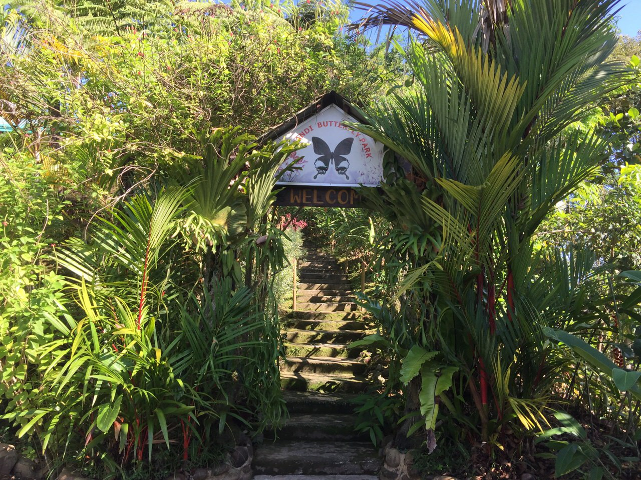 Kipandi Butterfly Park 4510
