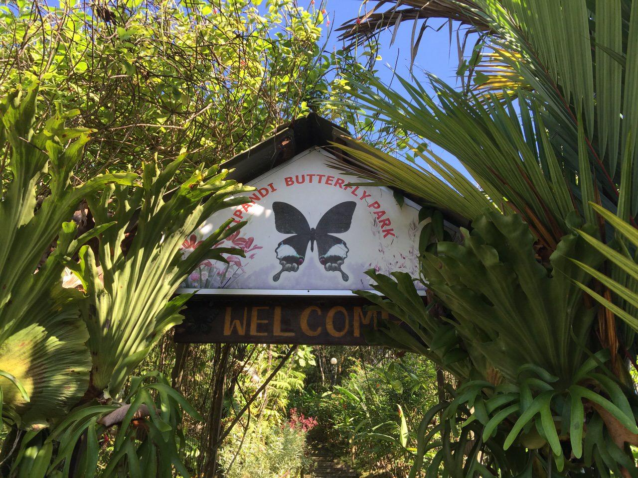 「Kipandi Butterfly Park」ボルネオカブトムシに出会えた親子で楽しいコタキナバルの昆虫パーク #マレーシア #サバ州