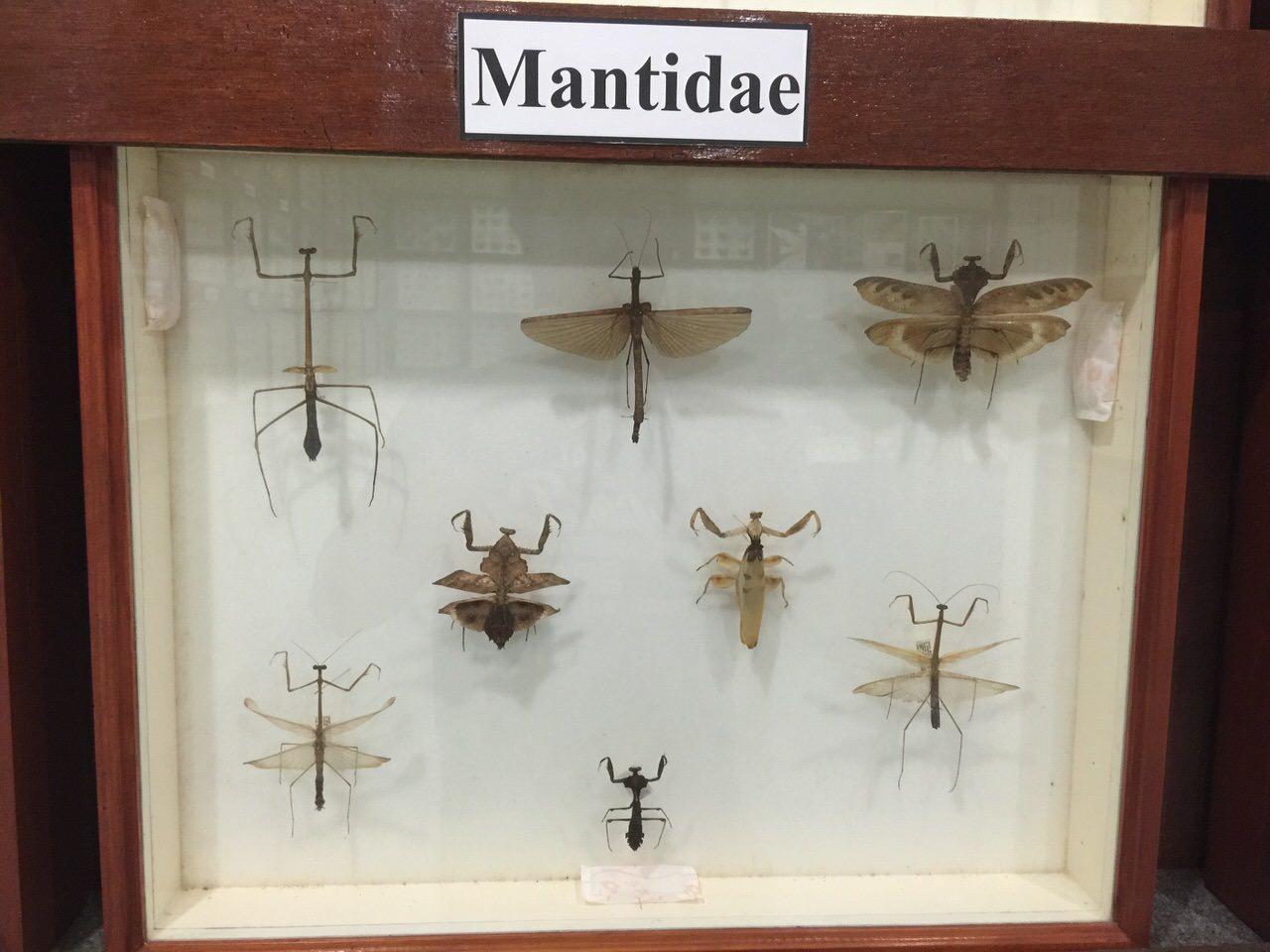 Kipandi Butterfly Park 4518