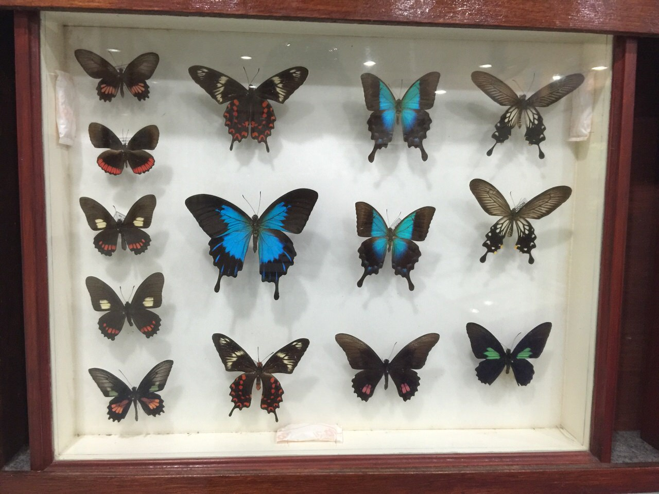 Kipandi Butterfly Park 4524