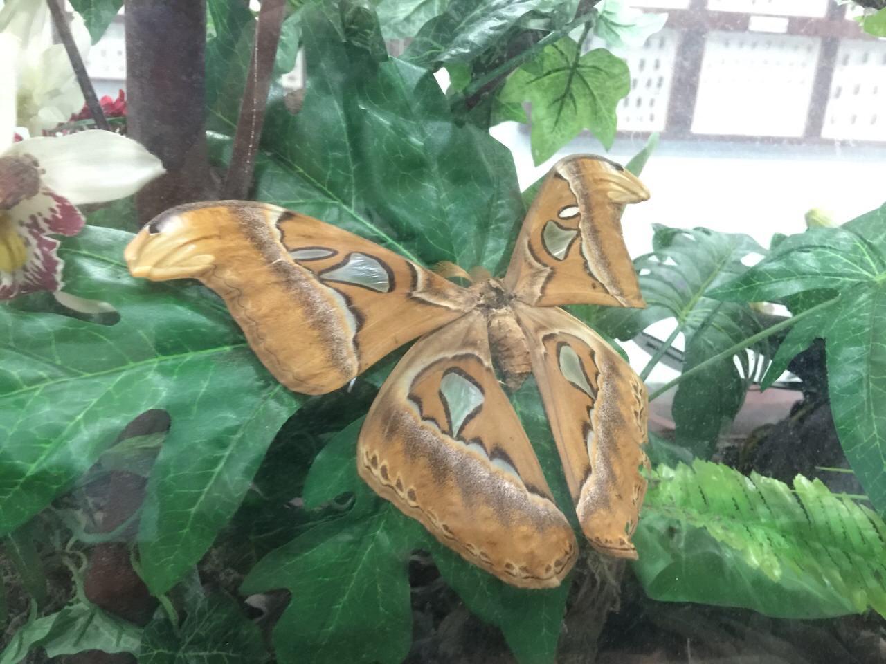 Kipandi Butterfly Park 4525