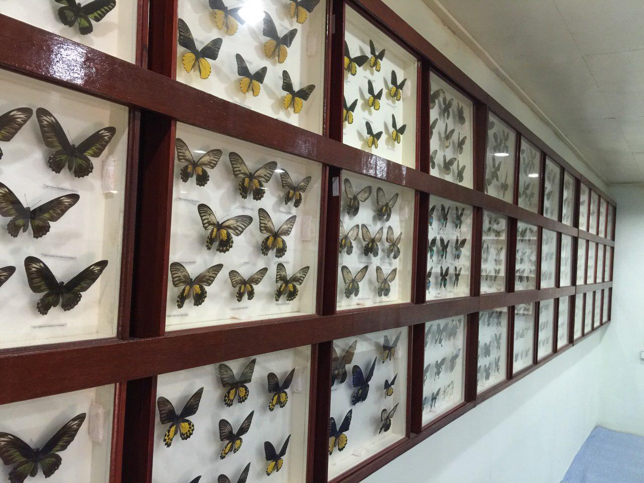 Kipandi Butterfly Park 4527