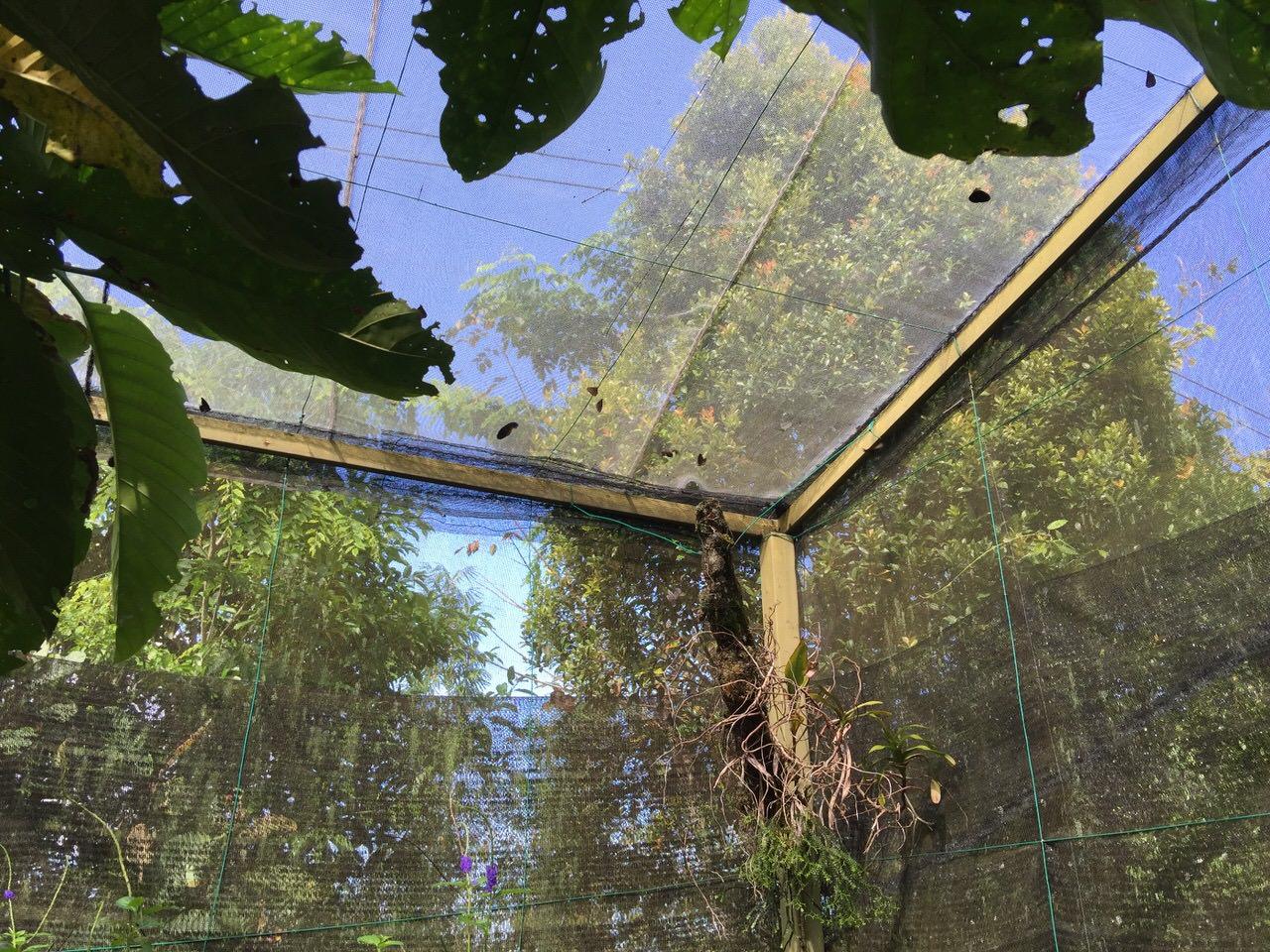Kipandi Butterfly Park 4535