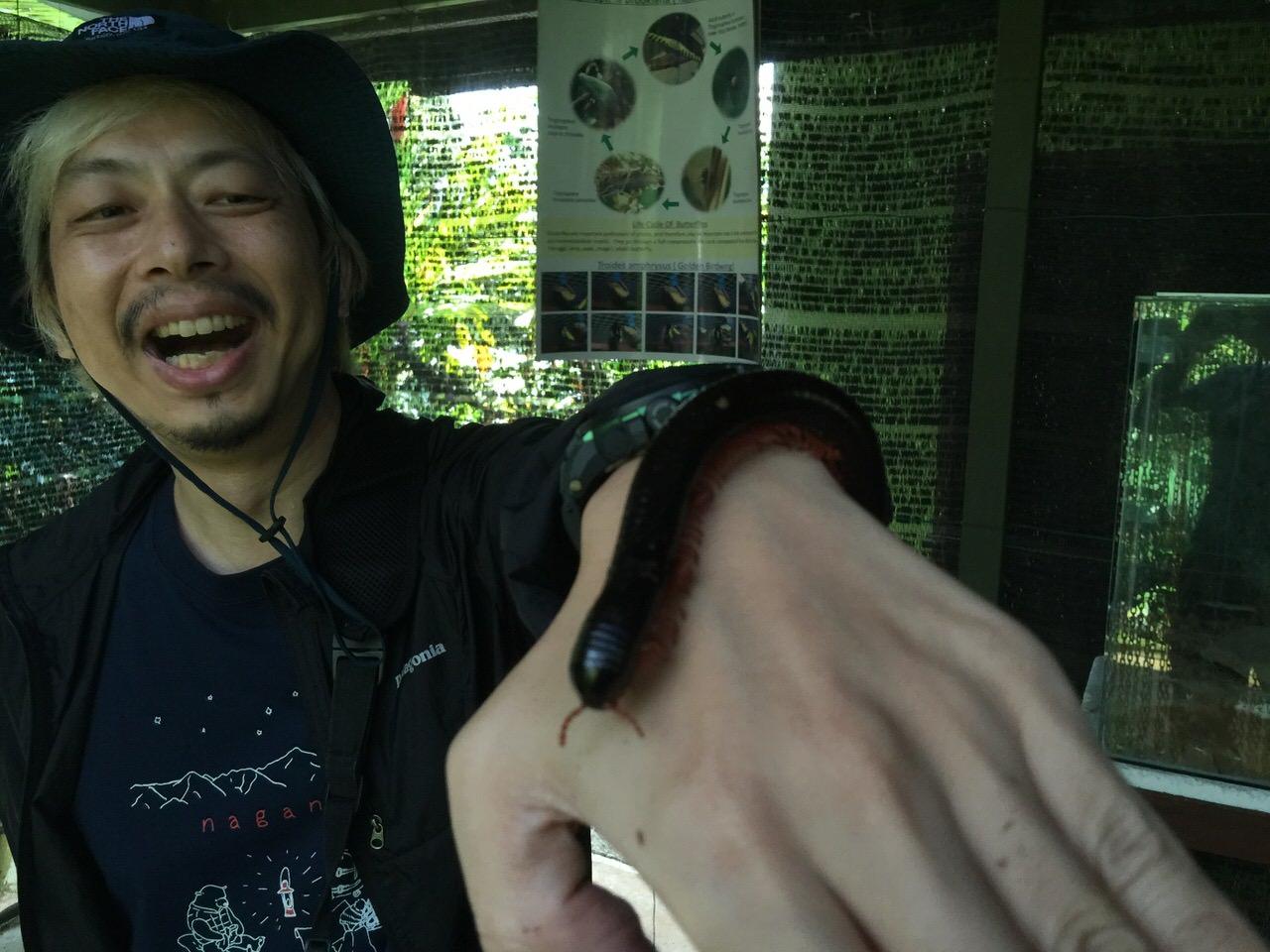Kipandi Butterfly Park 4562