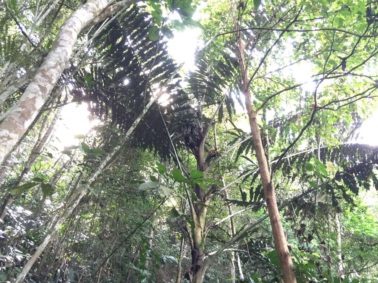 Kipandi Butterfly Park 4590