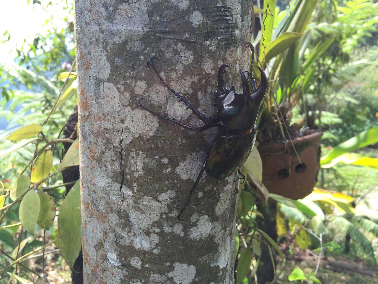 Kipandi Butterfly Park 4597