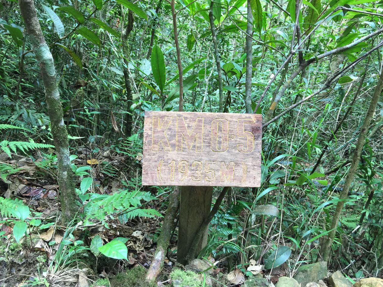Kota Kinabalu climbing 3984