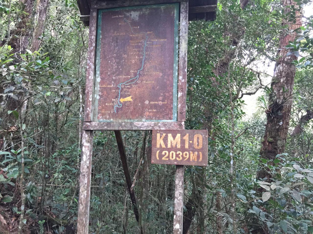 Kota Kinabalu climbing 3990