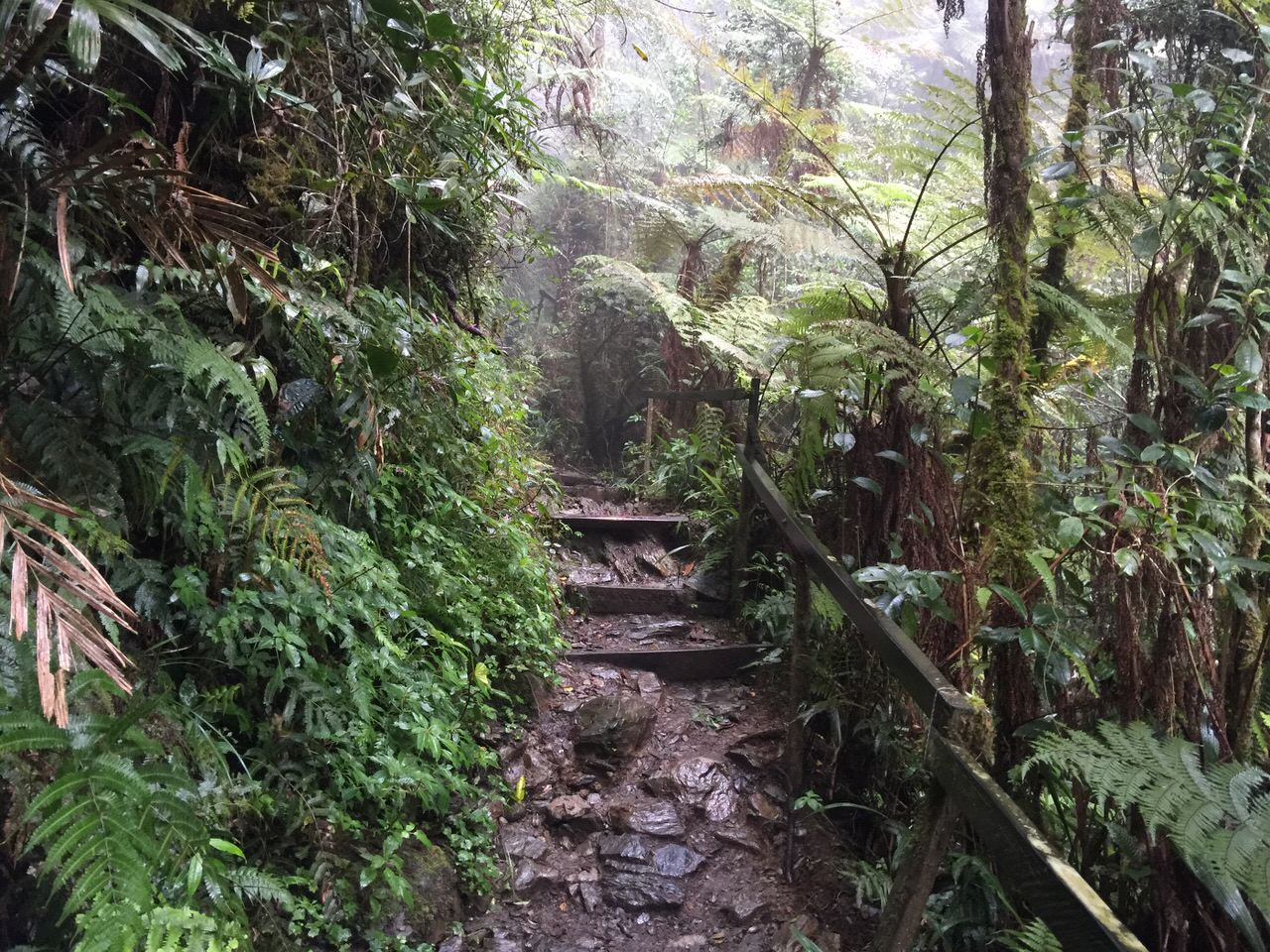 Kota Kinabalu climbing 4015