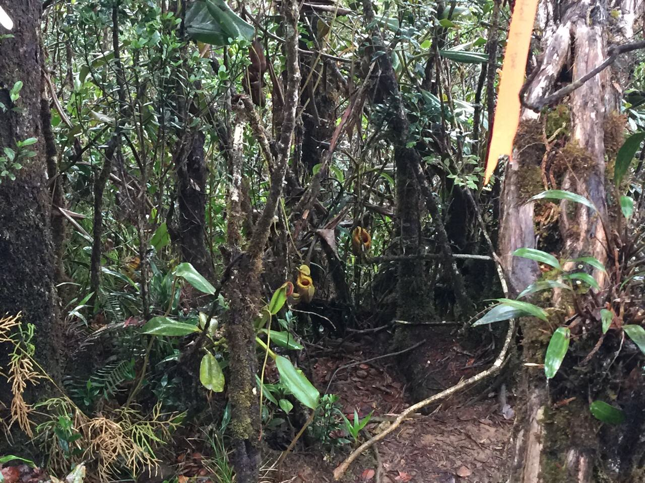 Kota Kinabalu climbing 4062