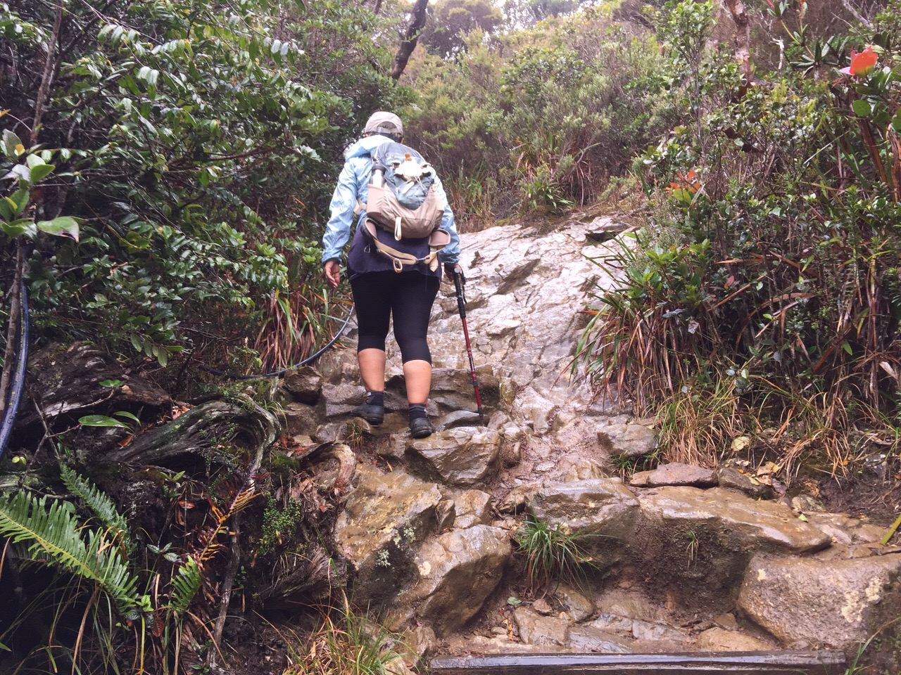 Kota Kinabalu climbing 4076