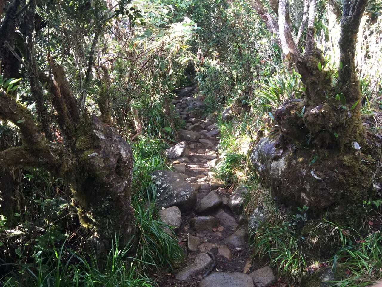 Kota Kinabalu climbing 4089