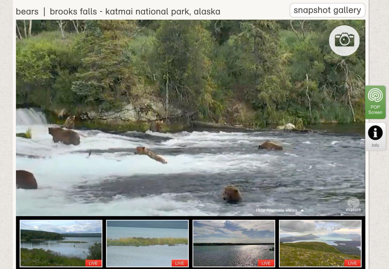 何か起こるのではないかとずっと見続けてしまうアラスカに設置されたクマのライブカメラが危険