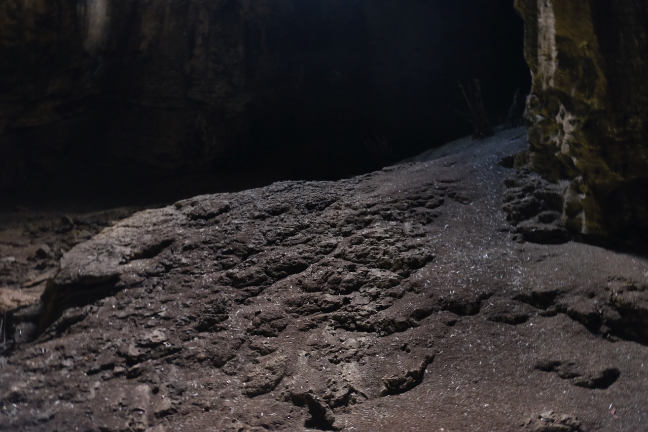 Gomantong cave 9776