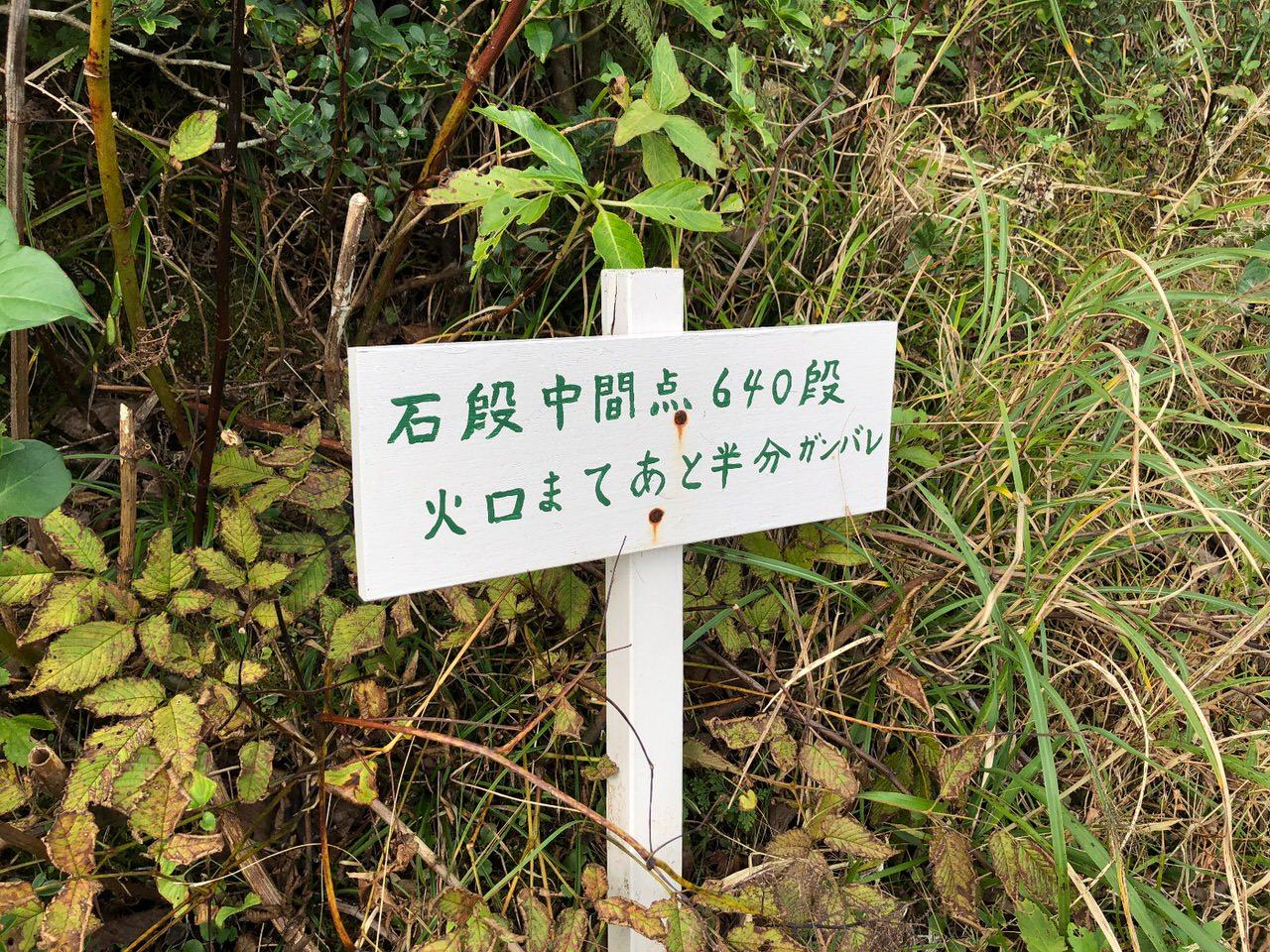 Hachijojima 16095320