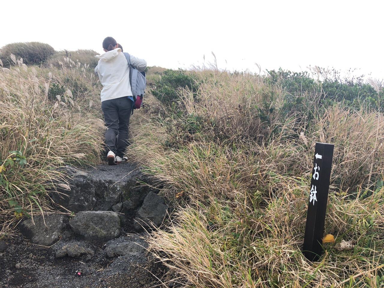 Hachijojima 16102919