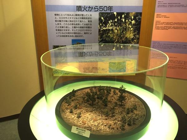 Kagoshima 8561