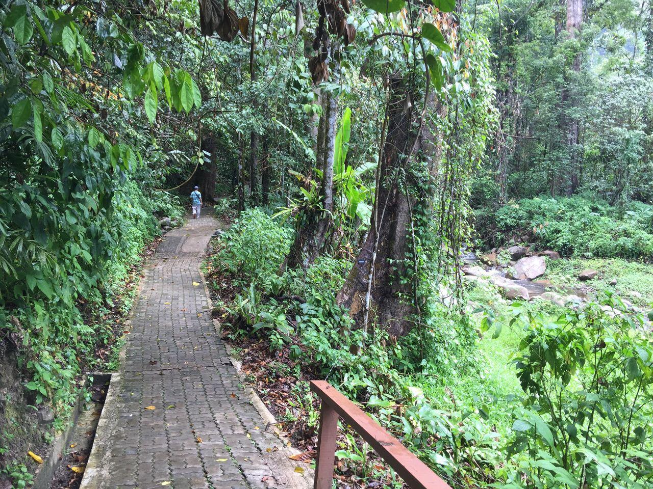 Mahua waterfall 4637