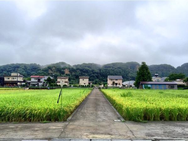 「根がらみ前水田(羽村)」春はチューリップ畑に、多摩川沿いには桜並木が‥‥羽村市は花と水のまち #tokyo島旅山旅