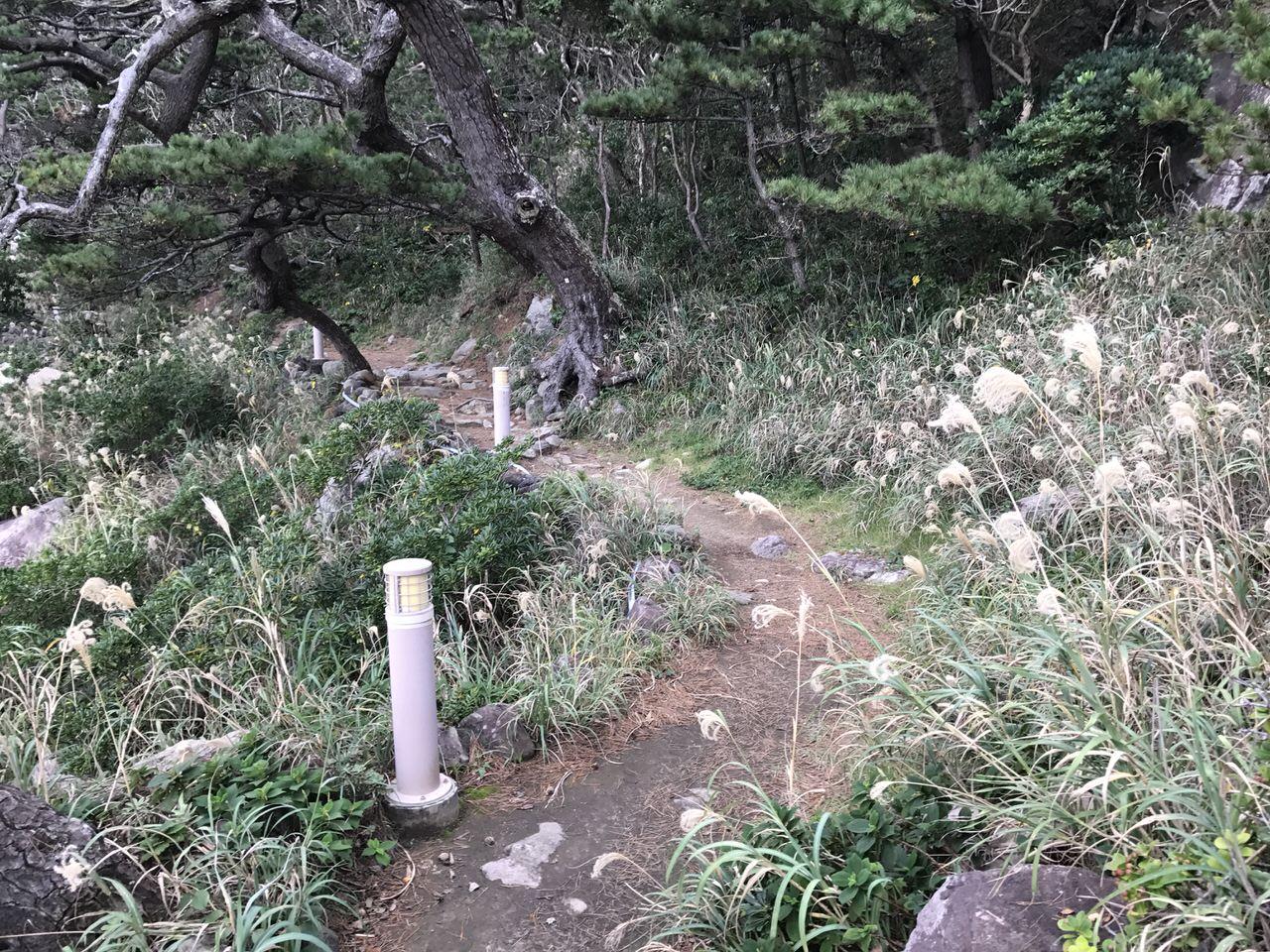 Niijima travel 2535