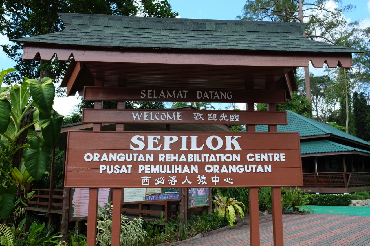 Sepilok orangutan rehabilitaion centre 9650