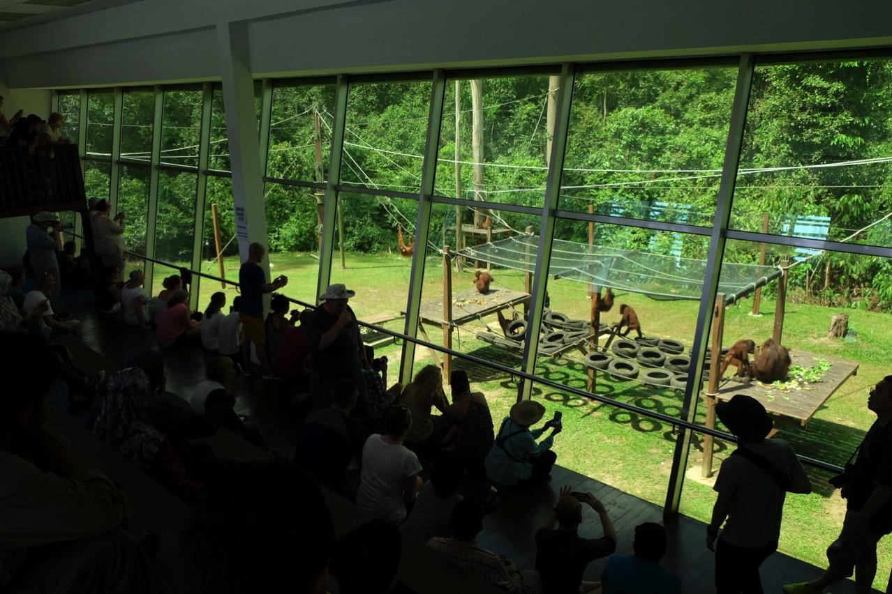 Sepilok orangutan rehabilitaion centre 9664