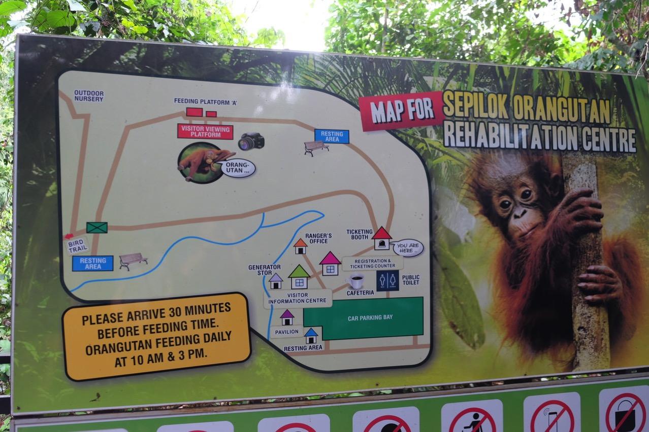 Sepilok orangutan rehabilitaion centre 9690