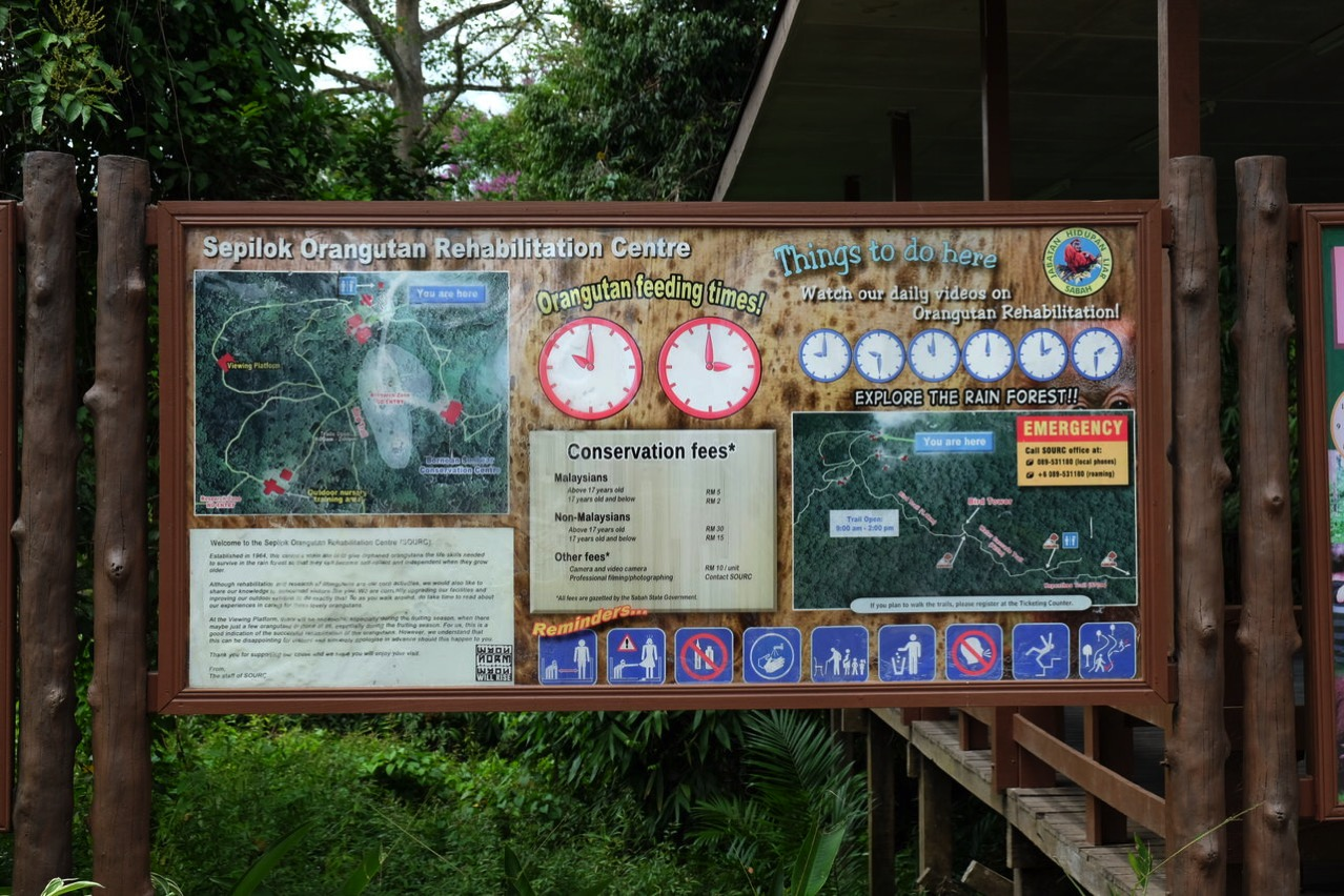 Sepilok orangutan rehabilitaion centre 9693