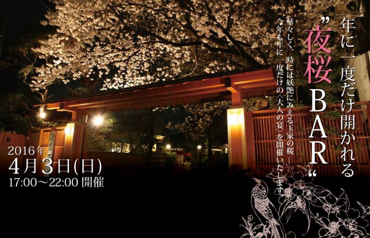 浦和の料亭玉家で年に一度だけ開かれる「夜桜BAR」は満開の桜で今夜!