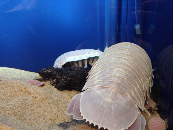 サンシャイン水族館「へんないきもの展」が本当に変すぎてワロタwww