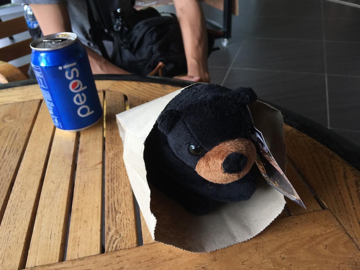 マレー熊を一頭保護しました #ボルネオ #サンダカン #sunbear #lovesabah