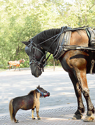 I Pix 2006 10 Horse081006 536X700