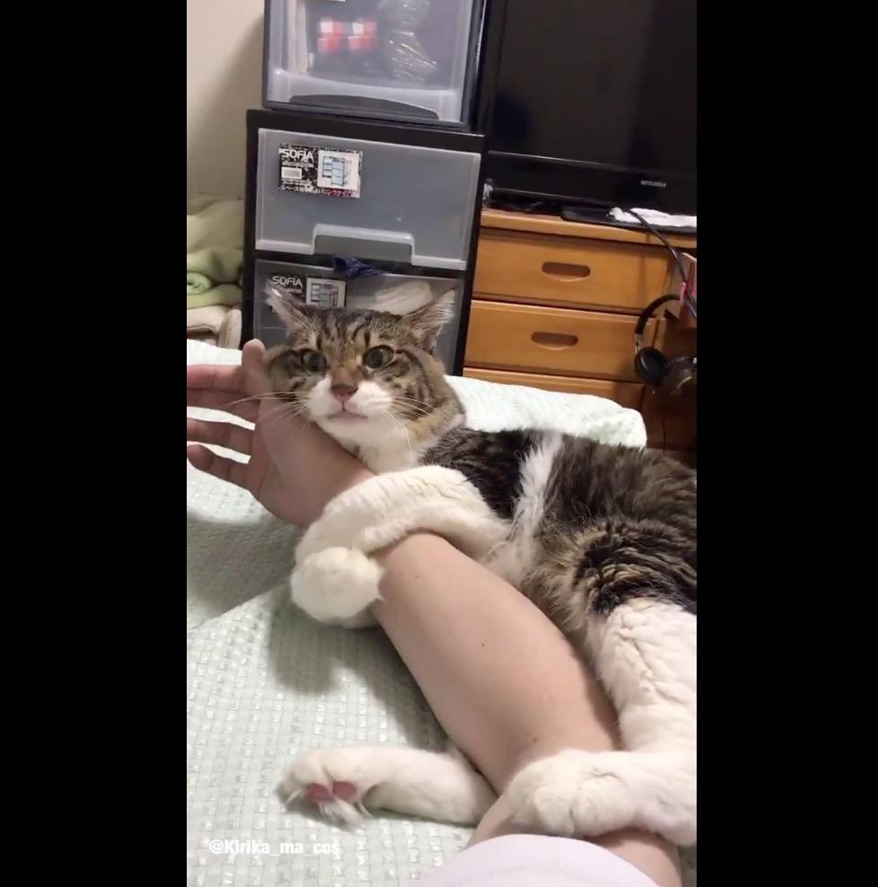 【動画】か、かわええ‥‥お互いに目覚めてから今の自分に起こってる状況にビックリしてる猫と飼い主