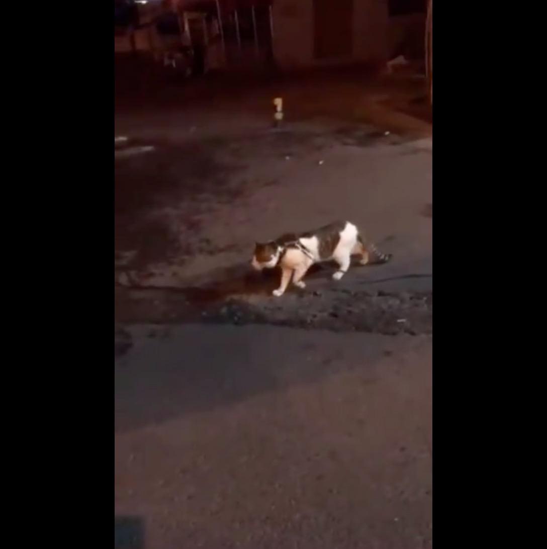 「ワイ、やったるんや‥‥」「あかんあかん!」猫のケンカを仲裁する犬がグッドボーイ