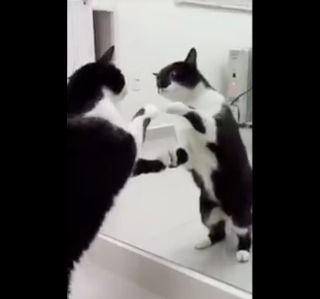【動画】鏡に映る自身を興味津々に見つめる猫が最後にキャッと驚く!?