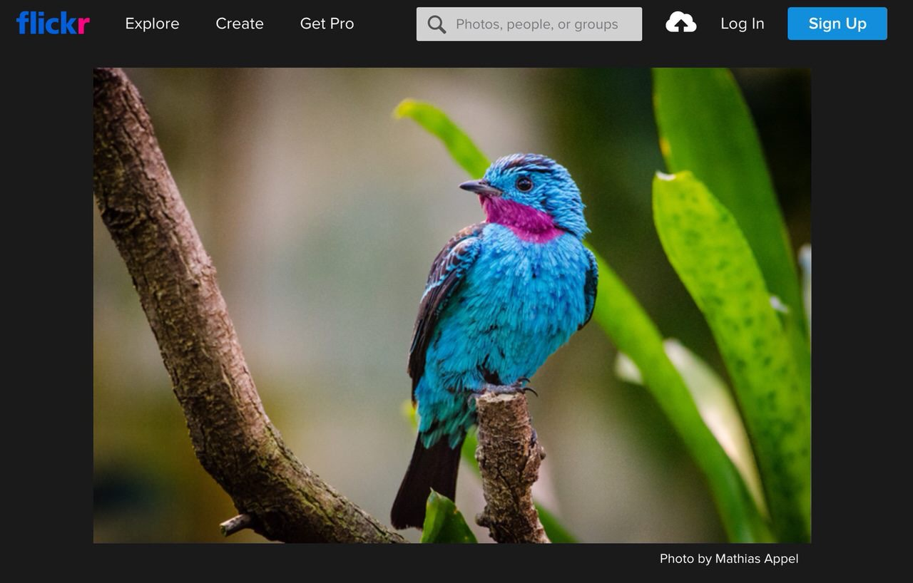 写真共有サイト「Flickr」無料版サービスを縮小へ 〜どうする古参ブロガー?