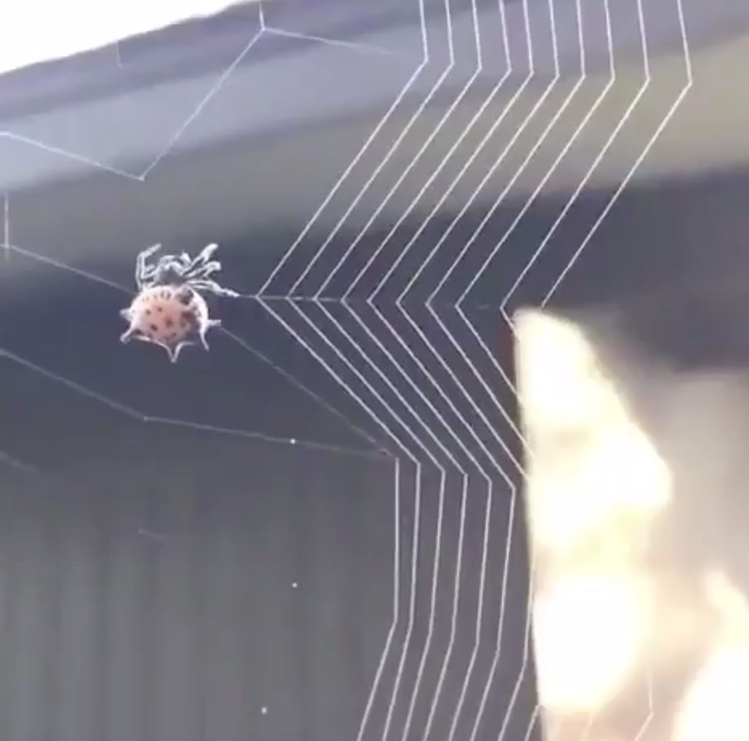 【動画】蜘蛛が糸を張って巣を作っている様子を収めた動画