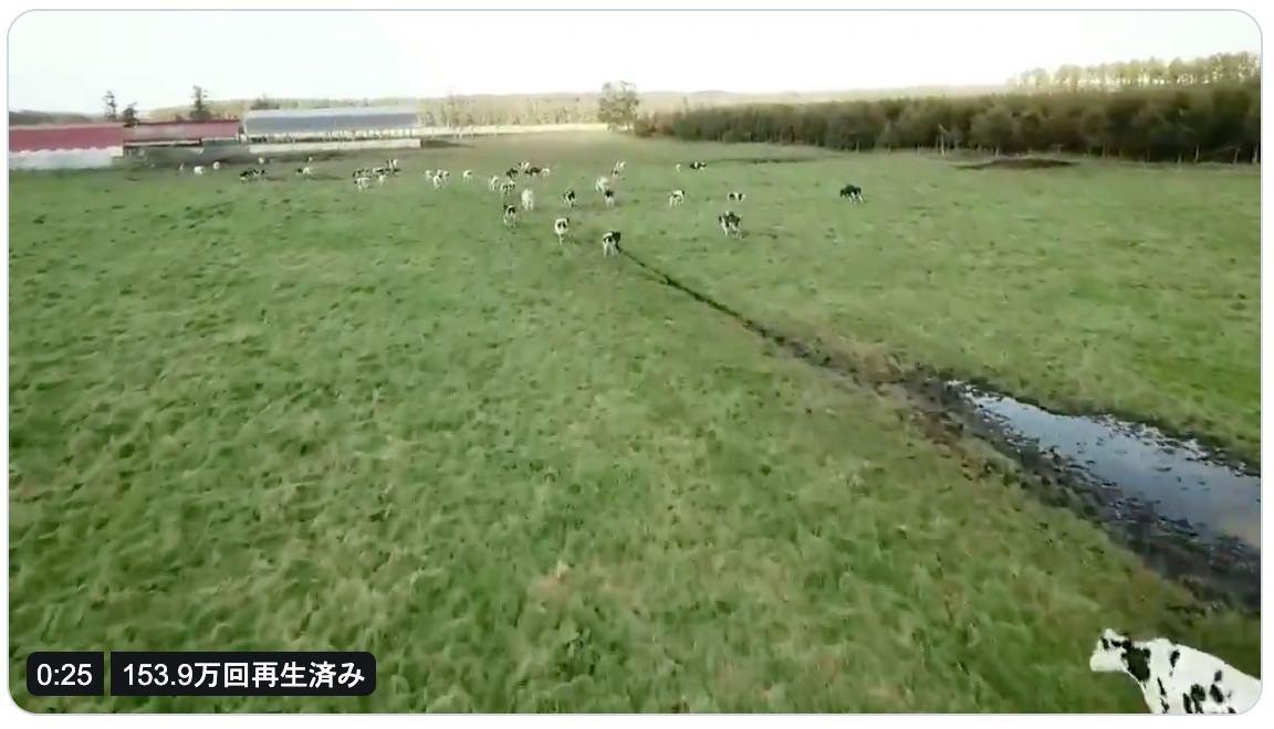 牛さん、起きて歩く!夕方の搾乳前にドローンで牛追いしている動画
