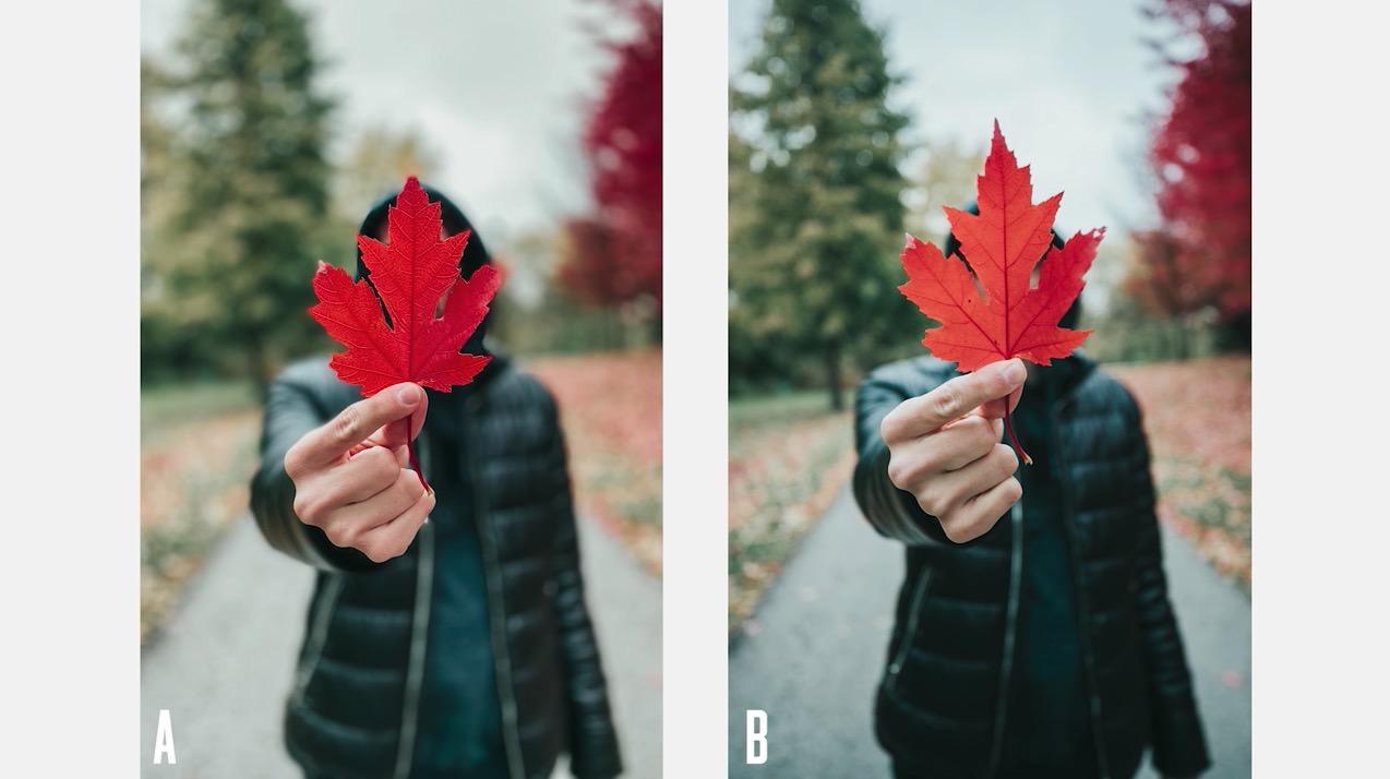 「iPhone 11 Pro」と「EOS-1D X Mark II」で撮影した写真の比較動画
