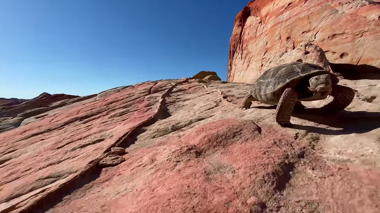 Apple、 iPhone 11 Proの超広角カメラで撮影した4K動画「A journey into the Valley of Fire」公開