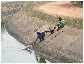 川に落ちてしまった子犬を救助する少年たち
