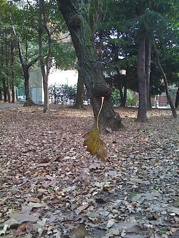 空飛ぶ枯れ葉