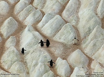 手をつないで仲良く歩くペンギンの写真